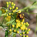 Yellow Flower Bee by Susan Porter
