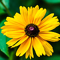 Yellow Flower - Featured 3 by Alexander Senin