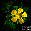 Yellow Flower by Grace Grogan