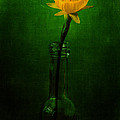 Yellow Flower In A Bottle I by Marco Oliveira