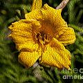 Yellow Flower In Oil by Tony Amat