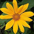 Yellow Flower Petals by Robert Hamm