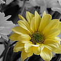 Yellow Flower by Russell Sherwood