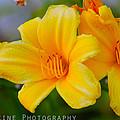 Yellow Flower by Ryan Rodriguez