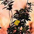 Yellow Flower Sunset by Dane Stensen