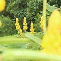 Yellow Flowers by Erik Lagman