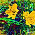 Yellow Flowers by Joan  Minchak