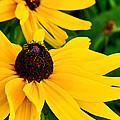 Yellow Flowers by Patrick Moore