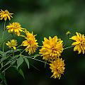 Yellow Flowers by Robert Mitchell