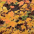 Yellow Foliage by Michael Mooney