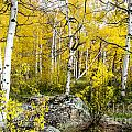 Yellow Forest by Baywest Imaging