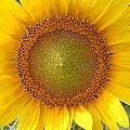 Yellow Glory #1 by Robert ONeil