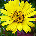 Yellow Glory by Aimee L Maher ALM GALLERY