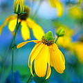 Yellow Guardians by David Champigny