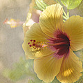Yellow Hibiscus by Peggy Hughes