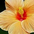 Yellow Hibiscus by Rand Herron