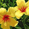 Yellow Hibiscus by Steve Simon
