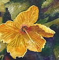 Yellow Hibiscus by Tammy Crawford
