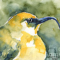 'akiapola'au - Hawaiian Yellow Honeycreeper by Claudia Hafner