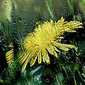 Yellow In The Rain by Sherman Perry