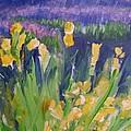 Yellow Iris by Eric  Schiabor