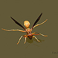 Yellow Jacket Wasp by Tom Janca