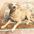 Yellow Lab On A Rug Watercolor Portrait by Mike Theuer