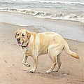 Yellow Lab On Beach Watercolor Portrait by Mike Theuer