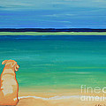 Yellow Dog On The Beach by Robyn Saunders