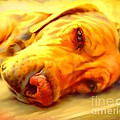 Yellow Labrador Portrait by Iain McDonald