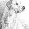 Yellow Labrador Show Dog Pencil Portrait by Mike Theuer