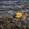 Yellow Leaf by Ashley M Conger