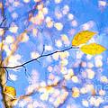 Yellow Leaves Of Fall by Lori Dobbs