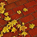 Yellow Leaves On Red Brick by Jean Goodwin Brooks