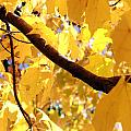 Yellow Leaves by Valentino Visentini