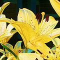 Yellow Lilies by Claire Bull