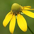 Yellow Mello by David Simons