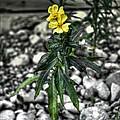 Yellow by Michaela Preston
