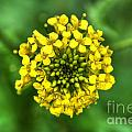 Yellow On Green by M Dale