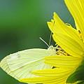 Yellow On Yellow by Eric Noa