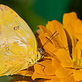 Yellow On Yellow by Lindley Johnson