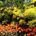 Yellow Orange - Springtime by Phil Banks