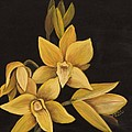 Yellow Orchid by Darice Machel McGuire