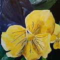 Yellow Pansy by Donna Cervelli