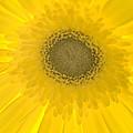 Yellow Petals by Leah McDaniel