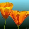 Yellow Poppies by Rand Herron