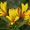 Yellow Red Flower by Wes and Dotty Weber