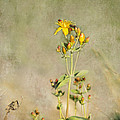 Yellow-red Wildflower With Texture by Belinda Greb