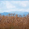 Yellow Reeds And Blue Mountains by Ingela Christina Rahm