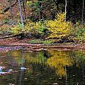 Yellow Reflections by Patti Smith